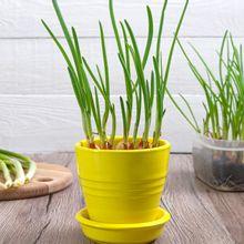 ¿Qué plantar en otoño? Ejemplos de hoja, flor y raíz